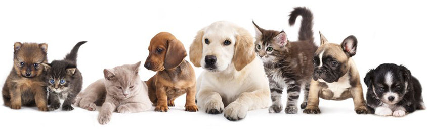 pets-banner
