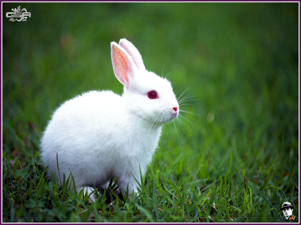 ws_rabbit_1024x768